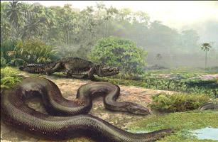 卫星拍到世界上最大蛇_最大蛇