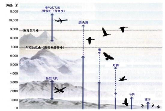 地球上最艰辛的迁徙_地球上最艰辛的迁徙 在9000米云霄中穿行