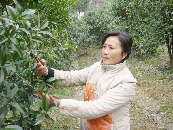 她从1998年开始种植花木