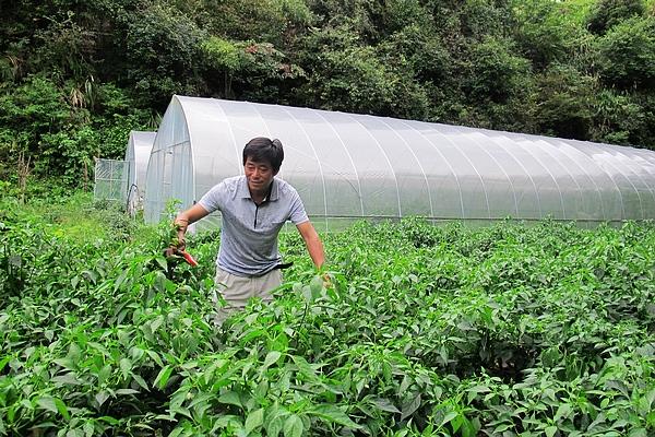 8种a蔬菜生虫的蔬菜,不甲鱼照样长的好,家里不羊排作用汤功效与打药图片